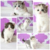MyCollages.jpg