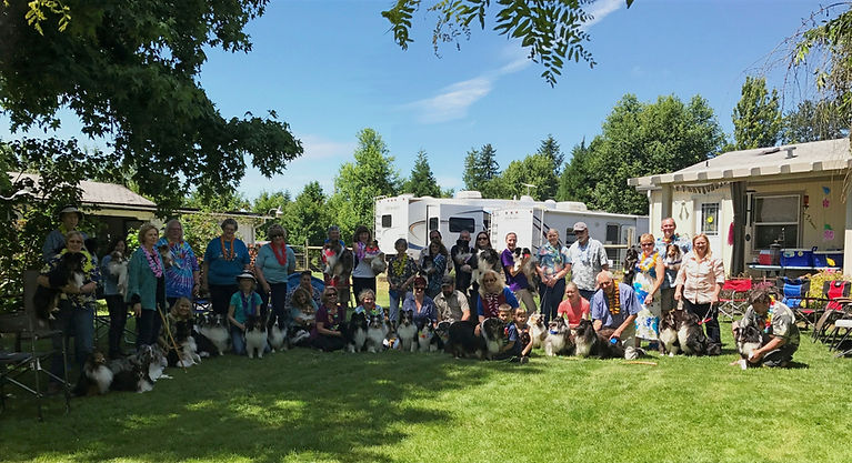 2017 Shindig at IvanLee Shelties, breeders of Shelties in Oregon