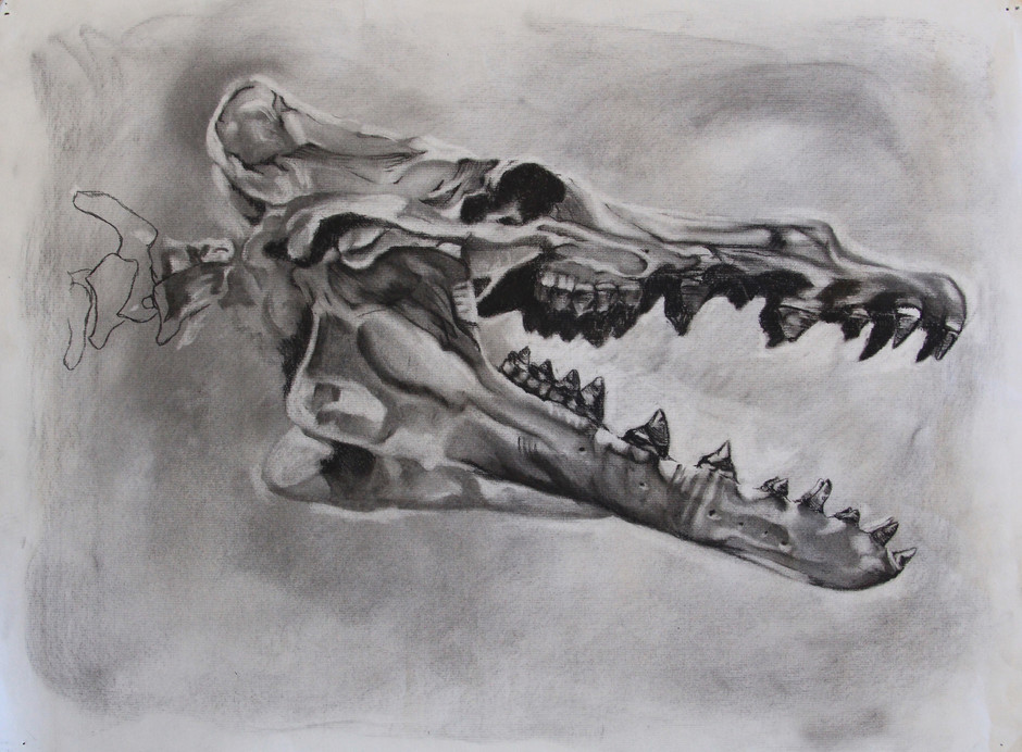 Fossil Study