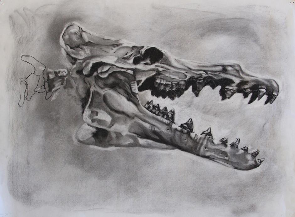 Fossil Study