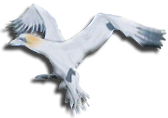 mouette off3.png