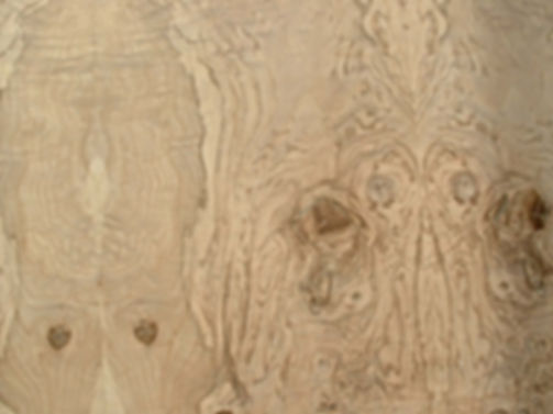 Les fous de Bassan - fond de bois 2