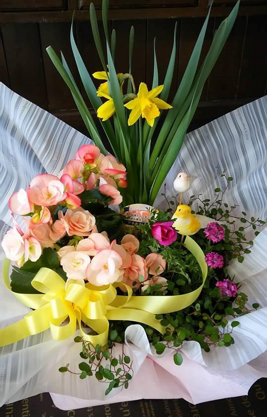 春の寄鉢 春色系