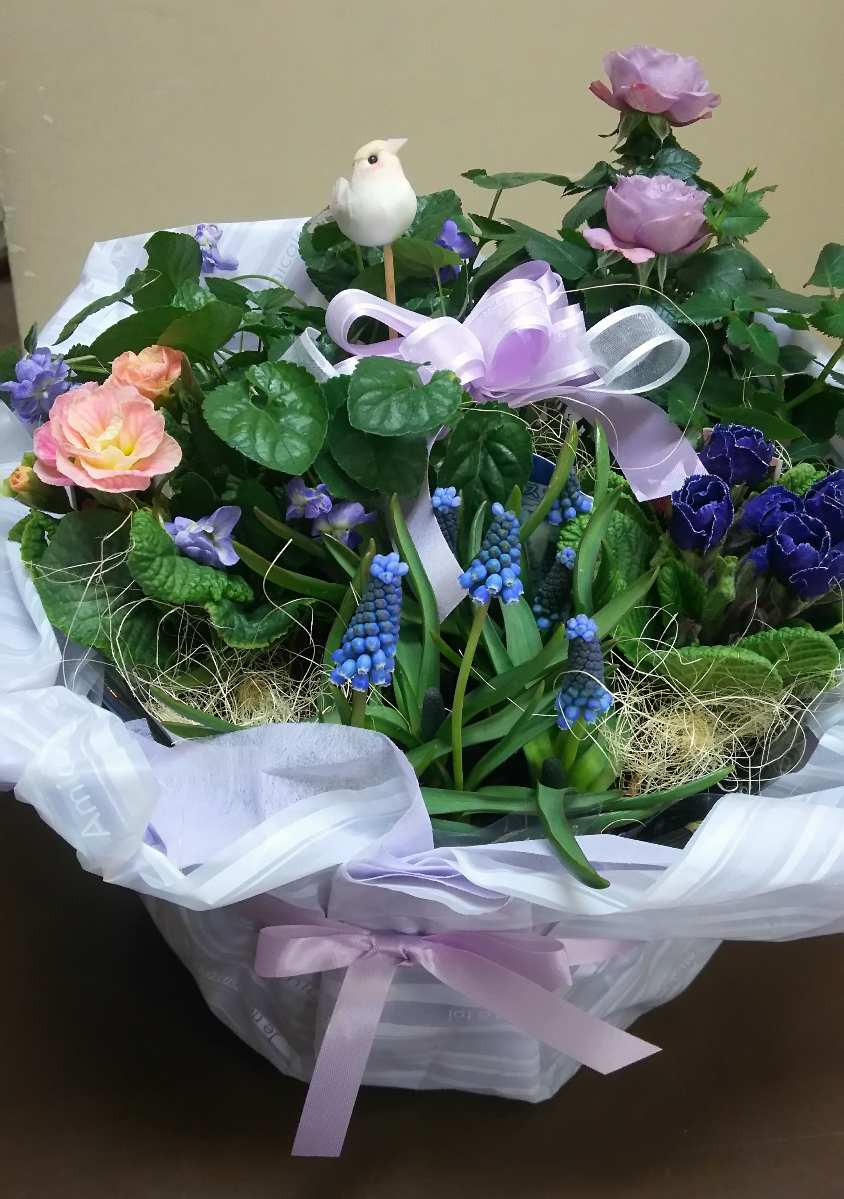 春の寄鉢(紫系)