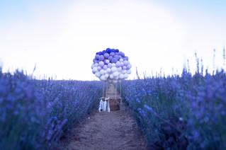 Hot Air Balloon in Lavender Field