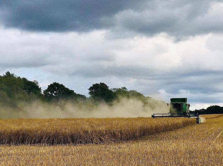 Harvest Time.jpeg