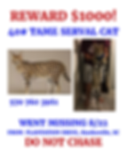 Toby Serval Cat flyer 5.png