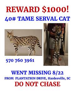 Toby Serval Cat flyer 5.png