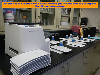 FOSR lab E. coli testing 3.jpg