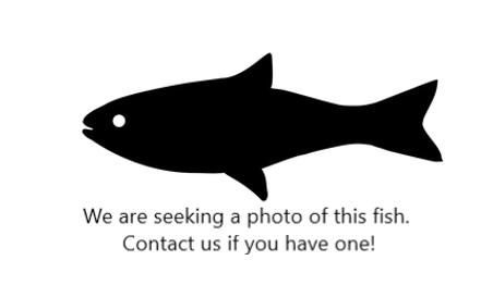 Fish clip.PNG