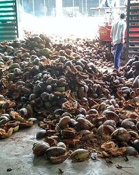 Coconut Husk.jpg
