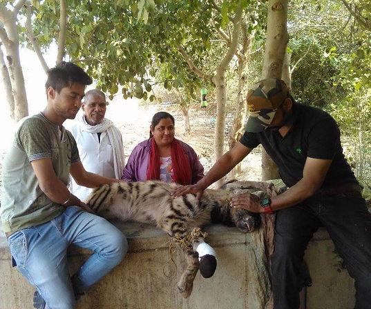Striped hyena after rescue.jpeg