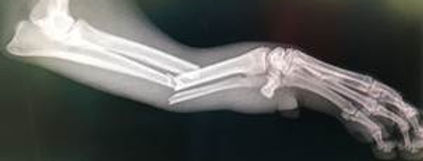 dog's broken front leg, © Sharing Solutions Publications