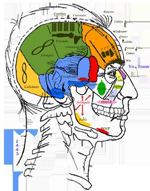 Osteopatía Informacional - Método Poyet