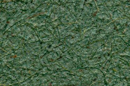 Folha papel floresta
