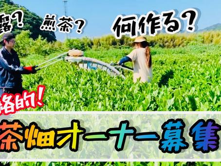 超本格的茶畑オーナー制度