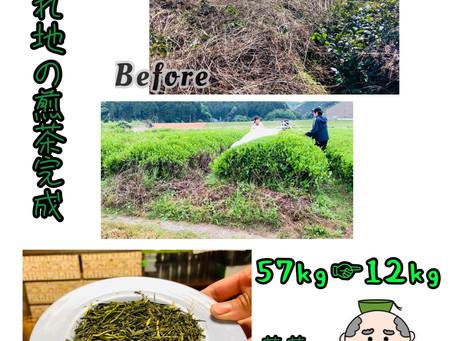 荒廃茶園からお茶作る!