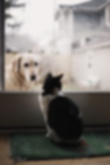 Cat & dog looking at each other through window