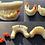 Thumbnail: Dental Model Resin