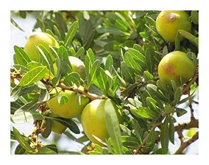 Descubre: Aceite Vegetal de Argán