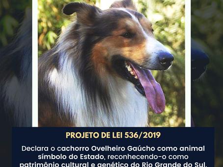 CCJ aprova parecer favorável ao PL que declara cachorro Ovelheiro Gaúcho como animal símbolo do RS