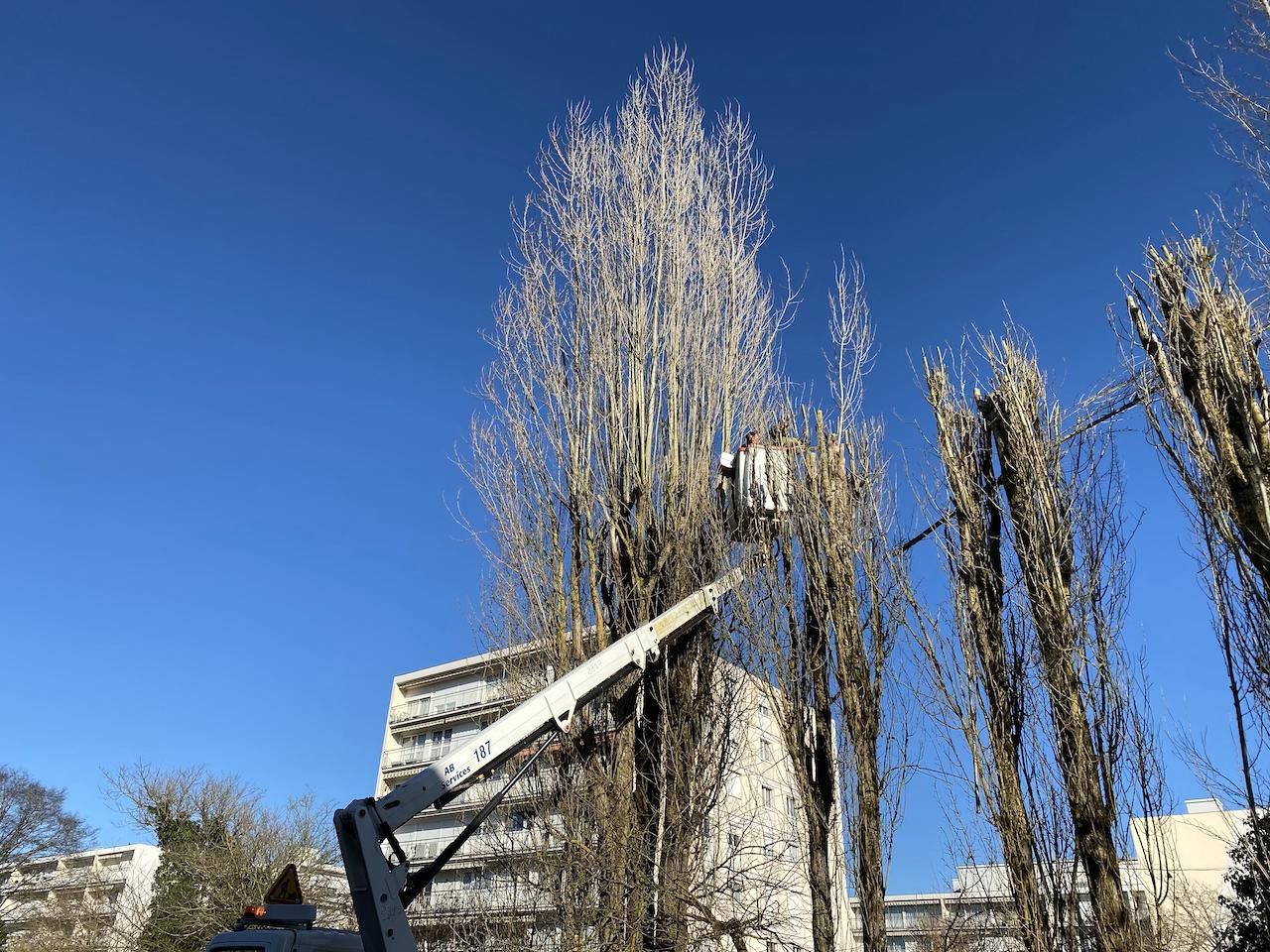 élagage arbres avec nacelle