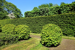 Entretien Espaces Verts et taille arbustes et haie