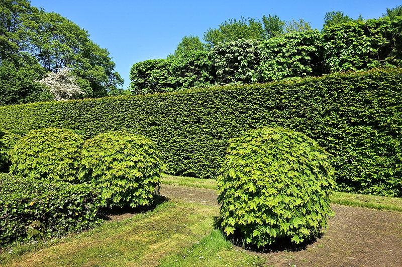 shorn-hedge-3392367_1920.jpg