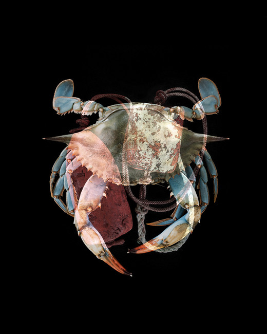 Buoy Crab I