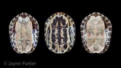 Turtle Shells, Underside