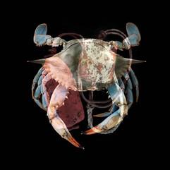 Buoy Crab