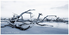 Bone Trees at Low Tide