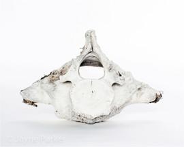 Whale Bone I