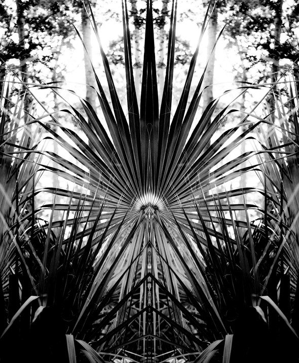 Palmetto Leaf II, Backlit