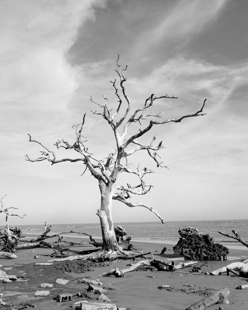 Bone Trees III