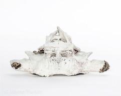 Whale Bone III