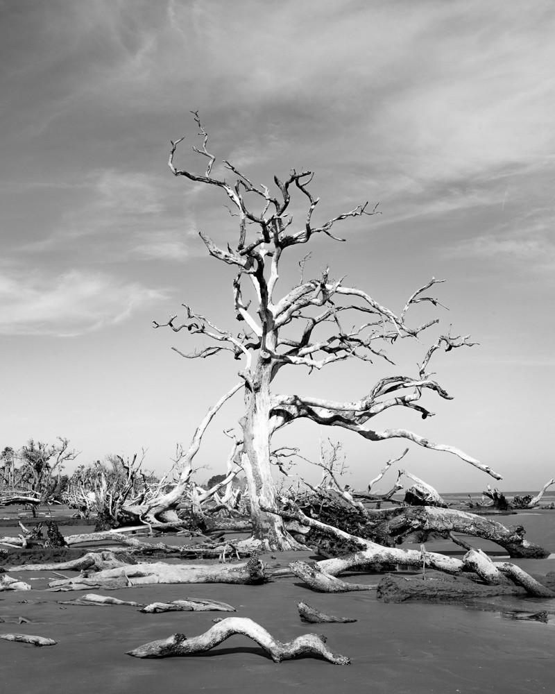 Bone Trees I