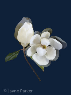 The First Magnolia