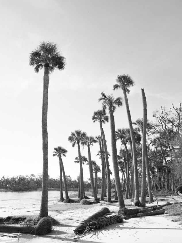 Day Palm