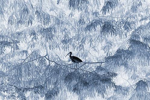 Ibis in Cobalt Blue
