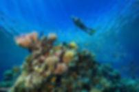 snorkeling-caraibe-costa-rica.jpg