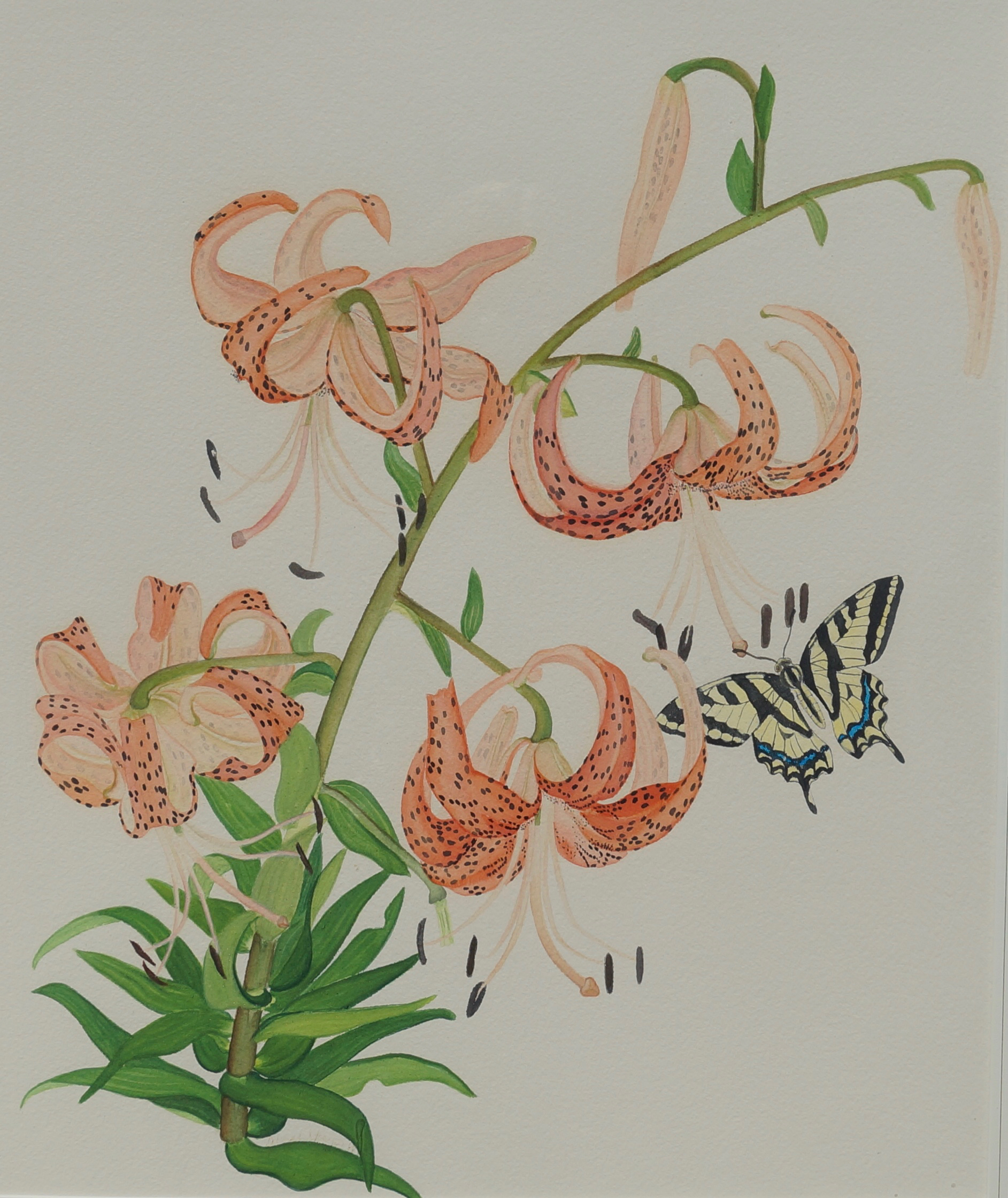Tiger Lilies and Kite Swallowtail