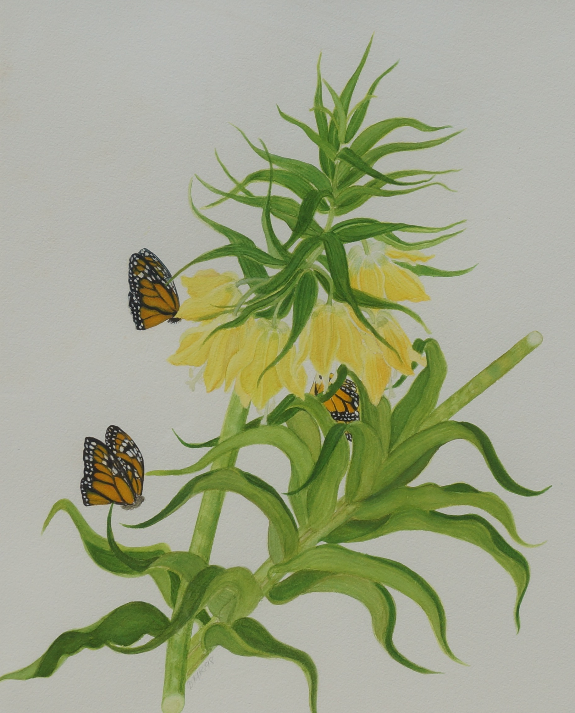 Yellow Fritalleria with Monarchs
