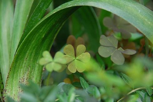 stampa green.jpg