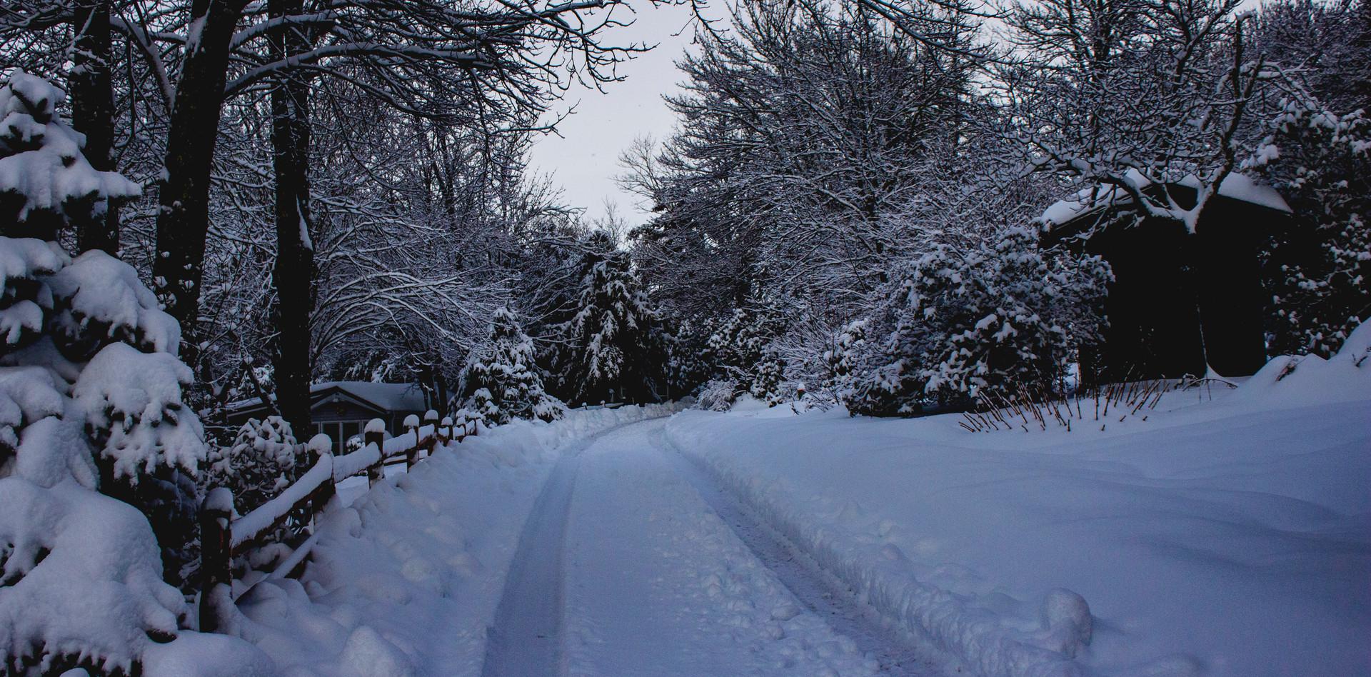 Wintry Lane
