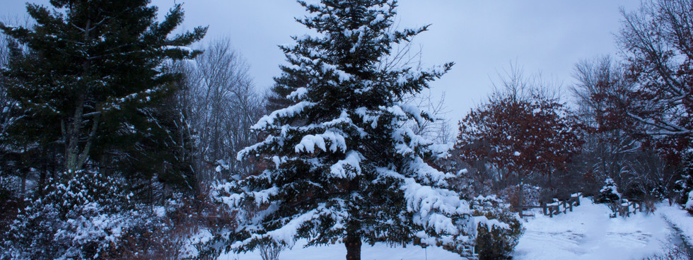 Snow-Filled Branches.jpg