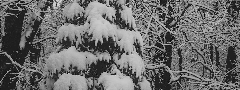 Snowy confection