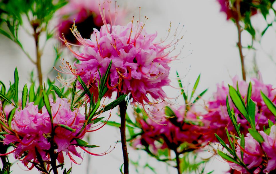 Blooming Sparklers