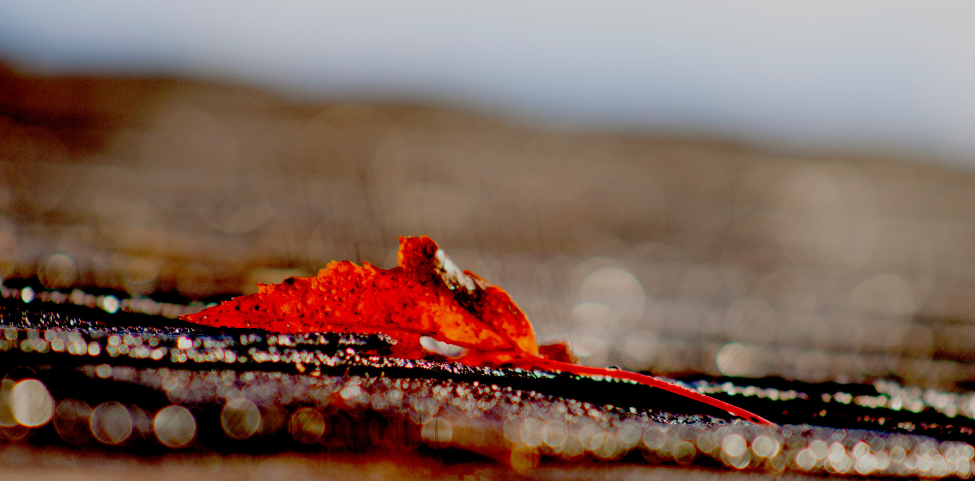 Rooftop Leaf