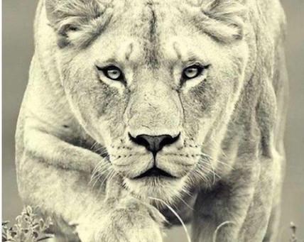 Lioness & Her Cub